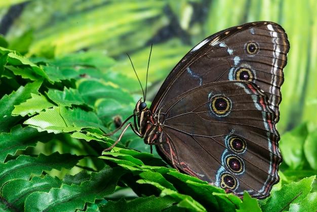 Вид сбоку крупным планом бабочка
