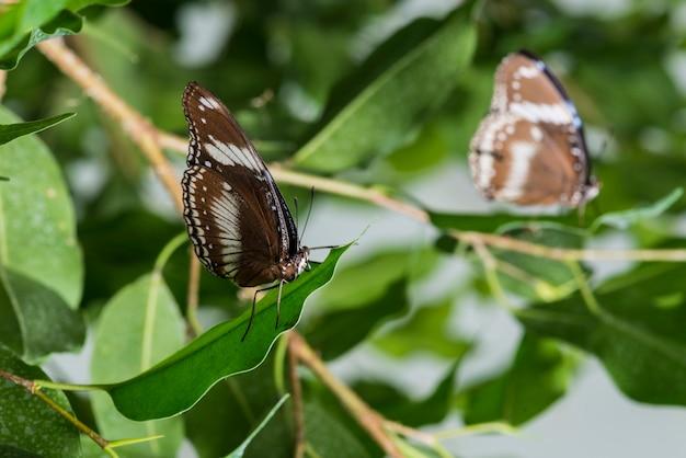 茶色の蝶の葉の上に配置