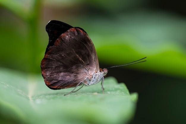 ぼやけて背景を持つ蝶を閉じる
