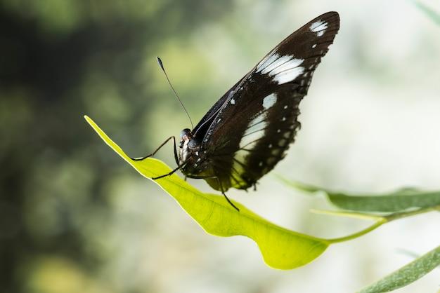 背景をぼかした写真の黒い蝶