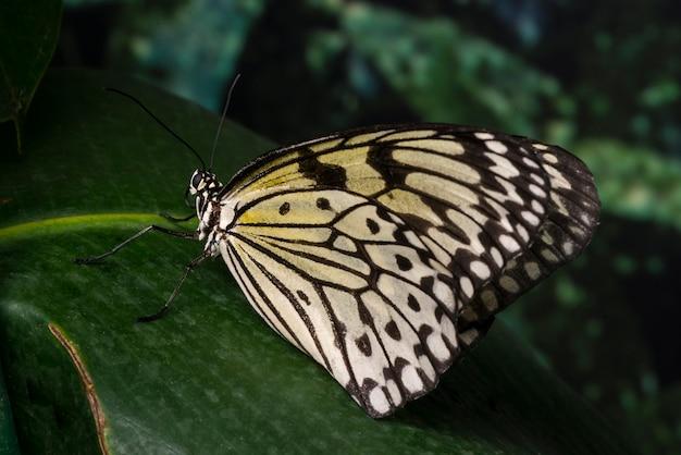 壊れやすい蝶の葉の上に座って
