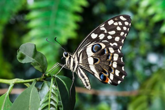ぼやけた背景を持つサイドビュー蝶
