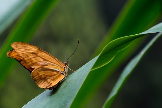 横に繊細なオレンジ色の蝶
