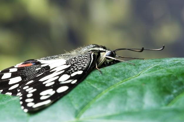 Вид сбоку крупным планом бабочка на листе