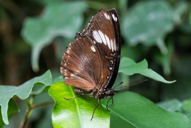 葉の背景を持つサイドビュー蝶