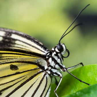 極端にクローズアップの葉の上の蝶