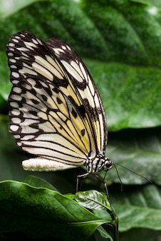 葉の背景を持つ淡い色の蝶