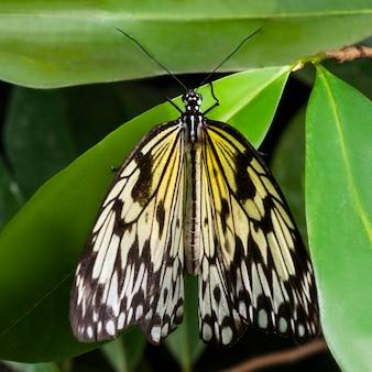 Вид сверху по центру желтая бабочка