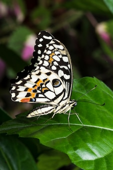 マクロのカラフルな蝶の葉