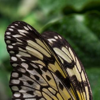 ぼやけて背景を持つ蝶の羽を閉じる