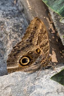 Вид сбоку бабочка сова на скале