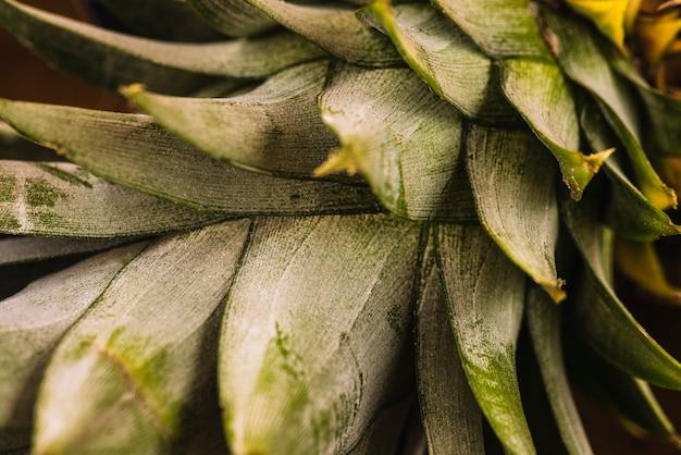 クローズアップの熱帯パイナップルの葉