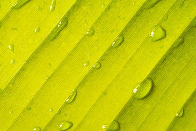 緑のバナナの葉のクローズアップ