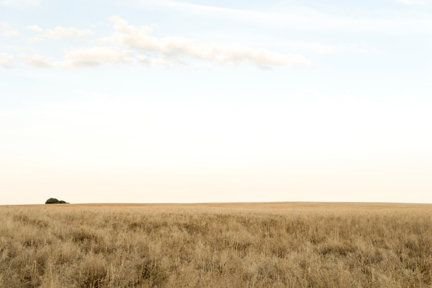 麦畑の日当たりの良い風景