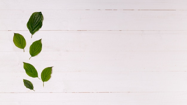 コピースペースを持つ葉の配置