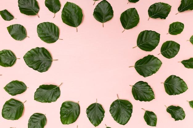 コピースペースの葉の配置