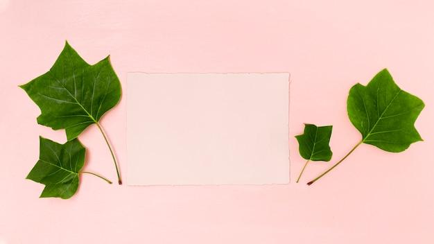 ピンクのコピースペースフラットと緑の葉