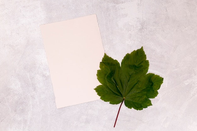 空白のホワイトペーパーとカエデの葉