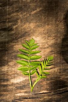 シダの葉を持つ木製の背景