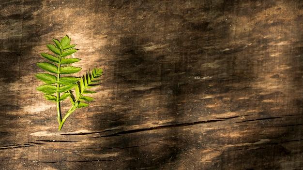シダの葉とコピースペースの木製の背景
