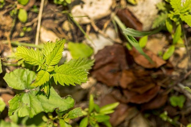 ぼやけた地面と屋外の集中植物