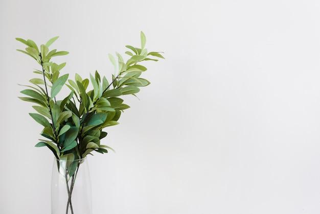 ガラス花瓶のクローズアップの植物の装飾