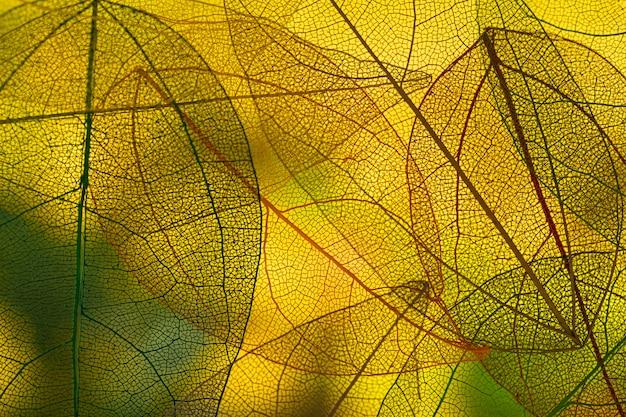 Яркие зеленые осенние листья