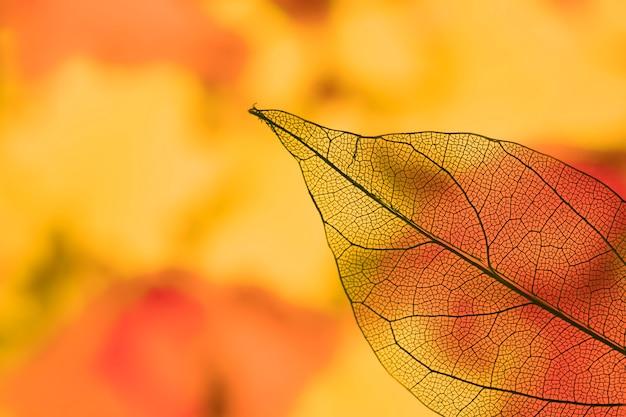 鮮やかな透明なオレンジ色の秋の葉