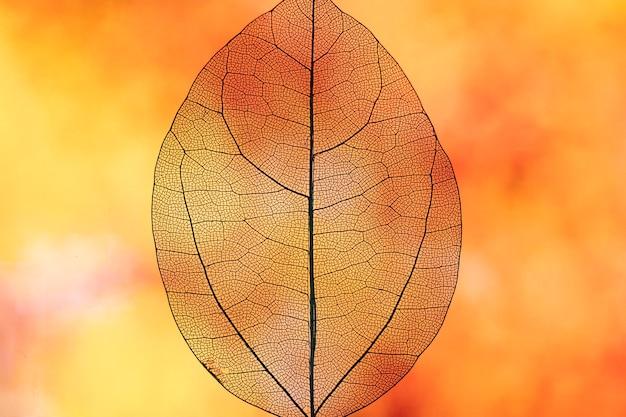 抽象的な透明なオレンジ色の秋の葉