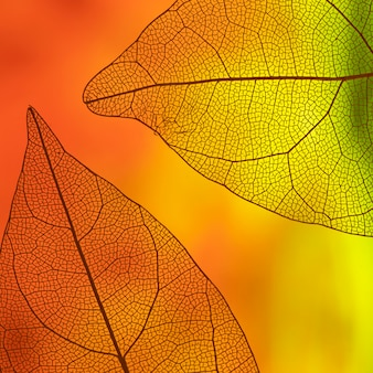 オレンジと黄色の透明な葉
