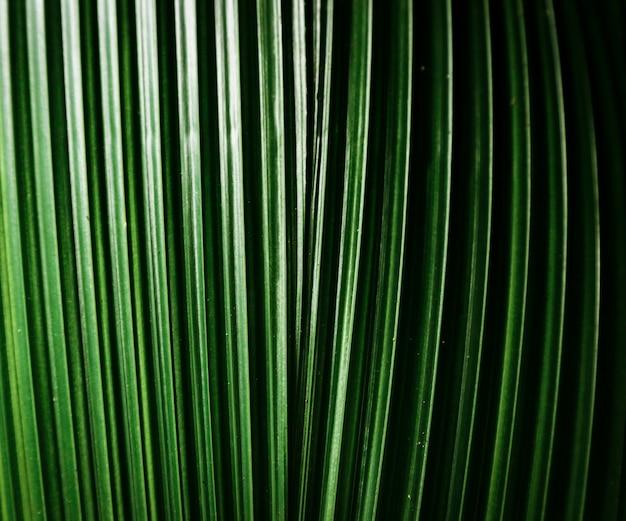 マクロ撮影の葉の詳細