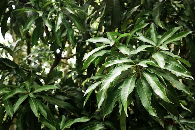 熱帯林の緑の葉