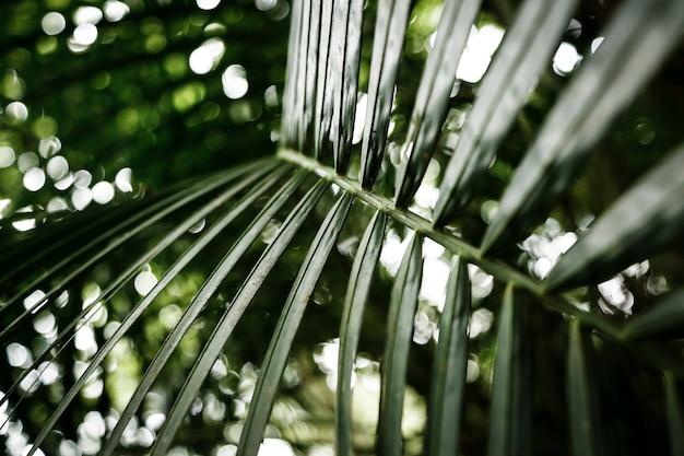 背景をぼかした写真の緑の葉のクローズアップ