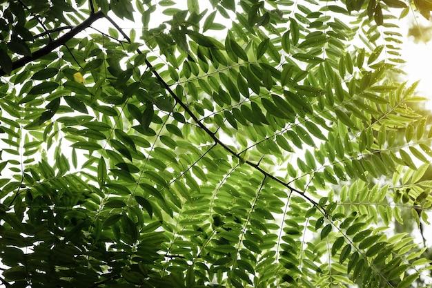 Красивые ветки деревьев на солнце