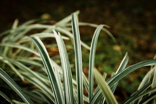 Крупным планом тропические листья на солнце