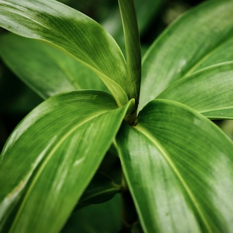 緑のエキゾチックな植物のクローズアップ