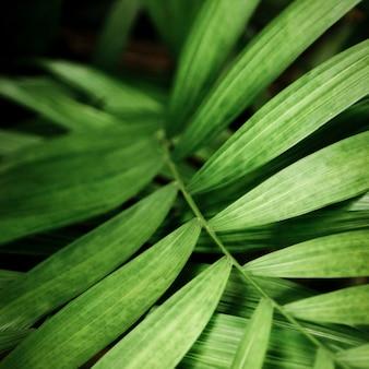 熱帯の緑の葉のマクロ写真