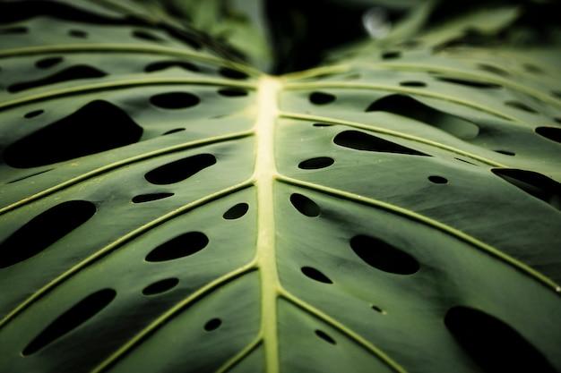 熱帯の葉の美しいクローズアップ