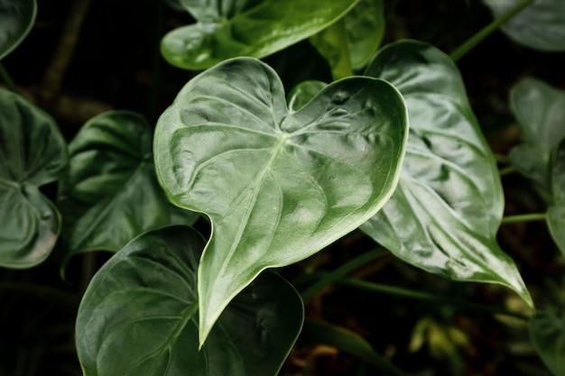 背景をぼかした写真のトップビュー緑の葉