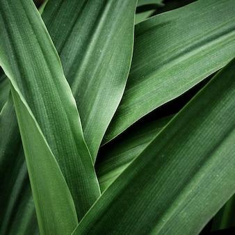 美しい熱帯の葉のクローズアップ
