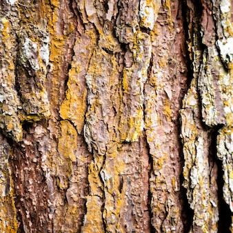 木の幹の質感のクローズアップ