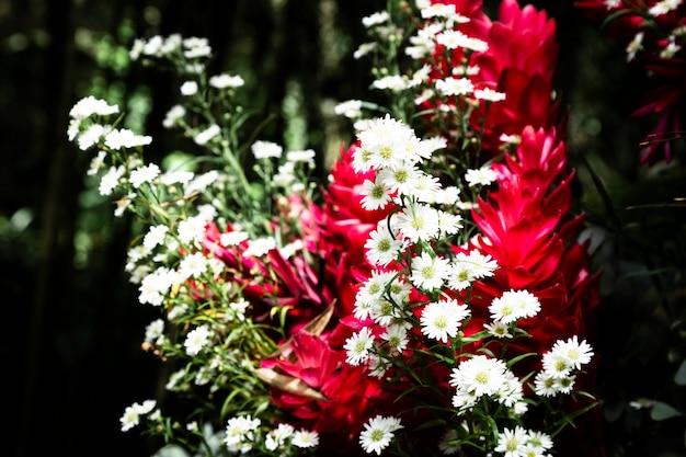 背景をぼかした写真とエキゾチックな花