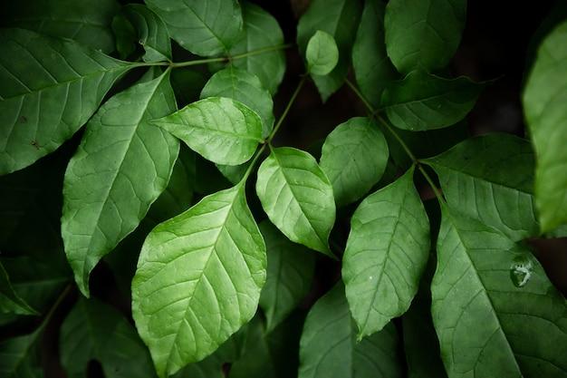 Зеленые листья крупным планом