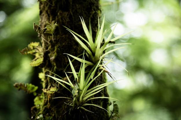 Растительность на ветке крупным планом