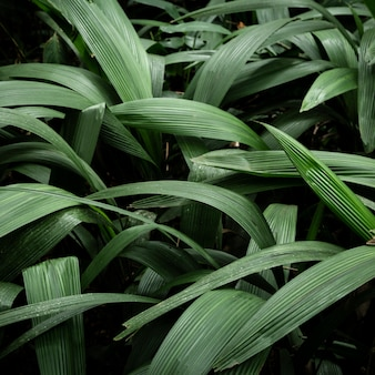 Зеленые тропические листья фон
