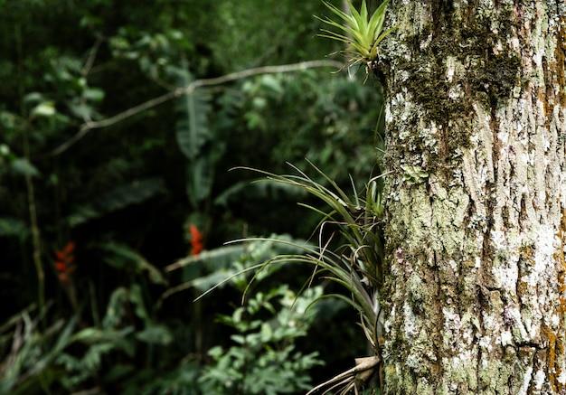 ぼやけた植生背景を持つ木の幹