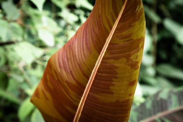 茶色の熱帯の葉のクローズアップ