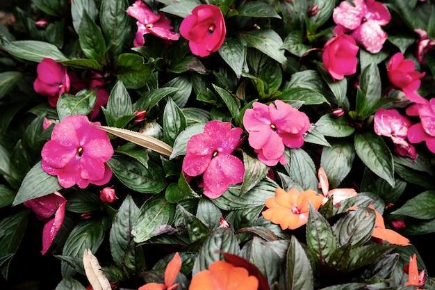 ピンクの花と葉の背景