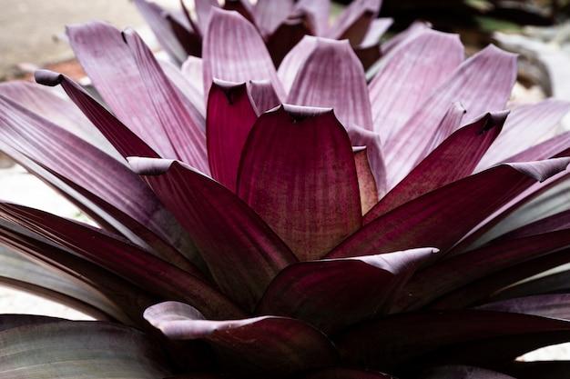 クローズアップピンクの熱帯の花びら