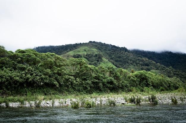 ロングショットの熱帯木と丘の風景